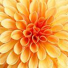 Dahlie gelb - Dahlia yellow by Martina Cross