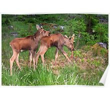 Twin Moose Babies Poster