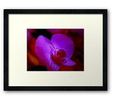 Purple Passion ^ Framed Print