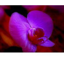 Purple Passion ^ Photographic Print