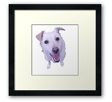 cute white dog looking up Framed Print