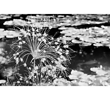 Black and White Monet Flower Photographic Print