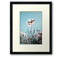 Summer Poppy Framed Print