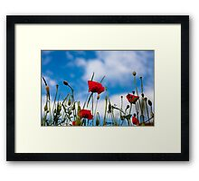 Summer Poppy Flower Framed Print