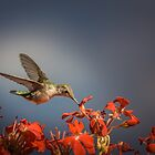 Colibri - My Summer Visitor by Jola Martysz