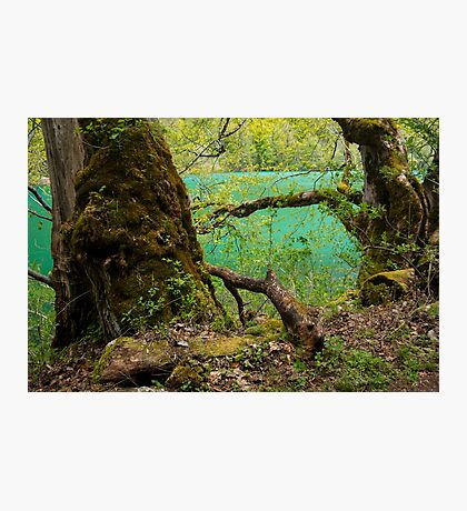 Old Tree - Nature Photography Photographic Print