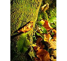 Autumnal Leaves - Nature Photography Photographic Print