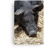 This Is Why I Don't Eat Animals... Canvas Print