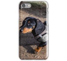 Young Dachshund iPhone Case/Skin
