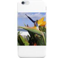 Fuerteventura flowers iPhone Case/Skin