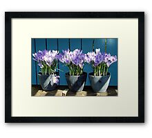 Spring-flowers in a flowerpot Framed Print