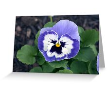 Spring Flower Series 54 Greeting Card