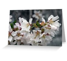 Spring Flower Series 55 Greeting Card