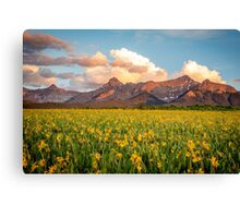 Dallas Divide Daisies at Sunset Canvas Print