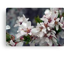 Spring Flower Series 57 Canvas Print