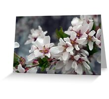 Spring Flower Series 57 Greeting Card