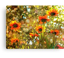 Coreopsis Sunburst Canvas Print