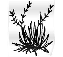 Flowering Grassy Plant Poster