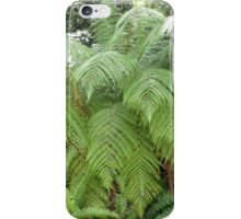 Beautiful Native Ferns gracing my cousins garden. St. Ives. Sydney. iPhone Case/Skin