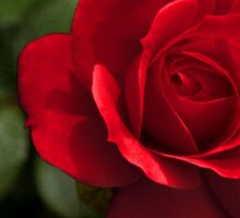 My Love is Like a Red, Red Rose... Sticker