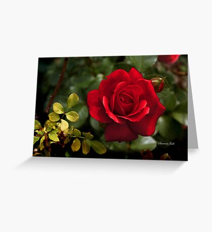 My Love is Like a Red, Red Rose... Greeting Card