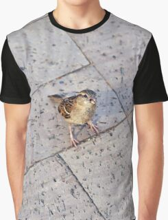 Itty Bitty Boston Birdie Graphic T-Shirt
