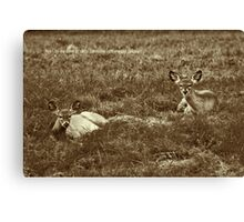 Now I Lay Me Down to Sleep ... Canvas Print