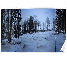 Swedish Forest In Winter VI Poster
