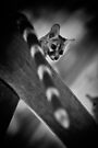 """""""Whats up down there?"""" (B&W) by Andreas Koerner"""