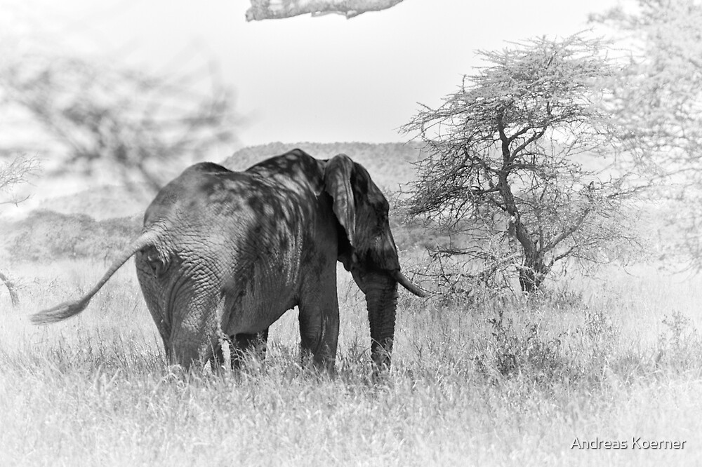 """""""Pass by of a old Giant"""" (B&W) by Andreas Koerner"""
