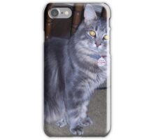 A Silver Maine Coon Kitten iPhone Case/Skin