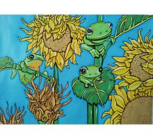 3 green frogs Photographic Print
