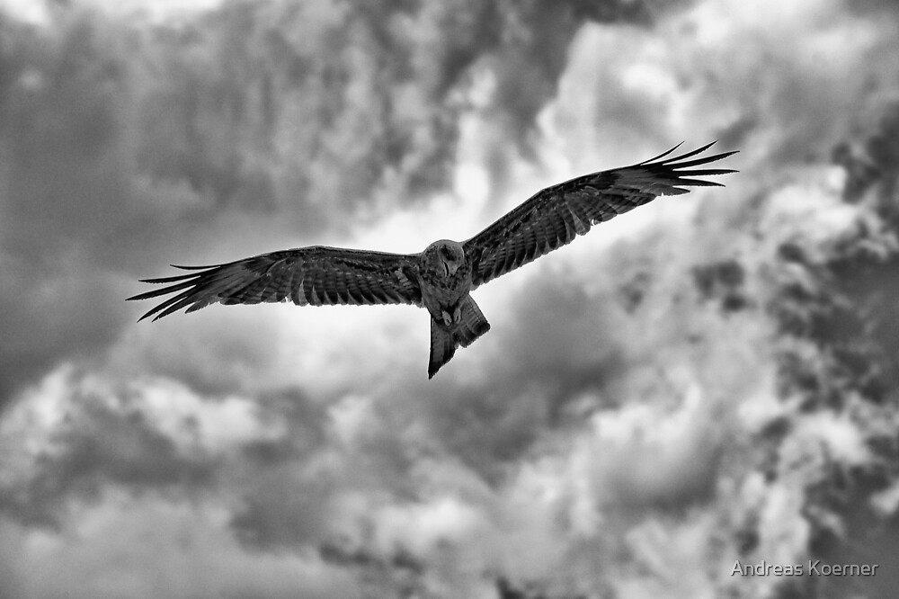"""""""On the Hunt"""" (B&W) by Andreas Koerner"""