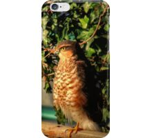 Just sitting on the fence iPhone Case/Skin
