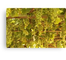 grapes from the sky Canvas Print