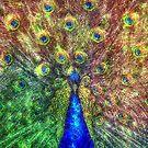 peacock by Ancello