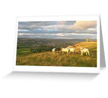 Sheep looking at Cowling Greeting Card