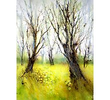 Carpets of Gold (Original painting sold) Photographic Print