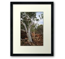 Old Gum Tree Framed Print