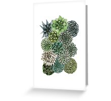 An Assortment of Succulents Greeting Card