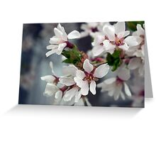 Spring Flower Series 58 Greeting Card