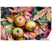 Apples and autumn leaves. Poster