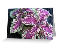 Spring Flower Series 63 Greeting Card