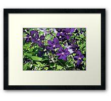 Longwood Gardens - Spring Series 148 Framed Print