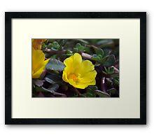 Longwood Gardens - Spring Series 153 Framed Print
