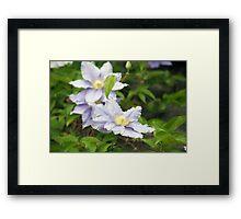 Longwood Gardens - Spring Series 156 Framed Print