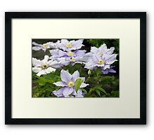 Longwood Gardens - Spring Series 157 Framed Print
