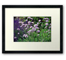 Longwood Gardens - Spring Series 159 Framed Print
