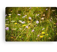 Beautiful Meadow Canvas Print