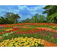 In the world of tulips       Photographic Print